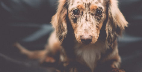 10 Amazingly Cute Photos of Really Cuddly Pets [Dogs]