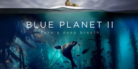 Watch This Incredibly Breathtaking Trailer for BBC's Blue Planet II — The Prequel